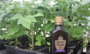 Növényvédelem Matrix Drops készítményekkel